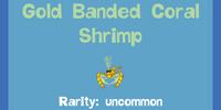 Gold Banded Coral Shrimp