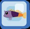 File:Fish Bicolor Blenny.png