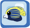 File:Fish Emperor Angelfish blue and yellow.png