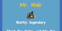 Mr. Hair