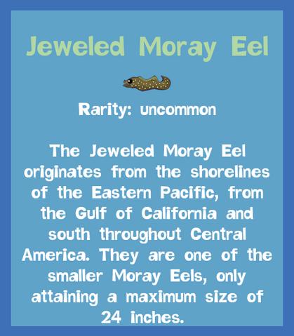 File:Fish2 Jeweled Moray Eel.png