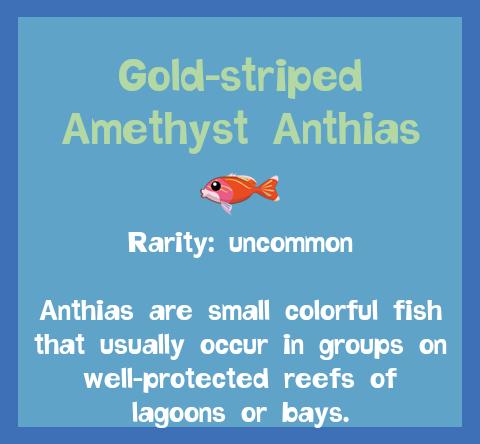 File:Fish2 Gold-striped Amethyst Anthias.png