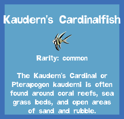 File:Fish2 Kaudern's Cardinalfish.png