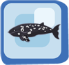 Fish Gray Whale