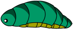 Hybee Larva