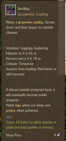 File:Grapevine Seedling.jpg