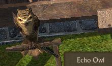 File:Echo Owl.jpg