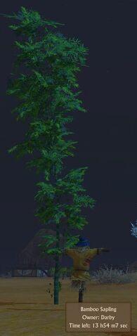 File:Bamboo Sapling.jpg