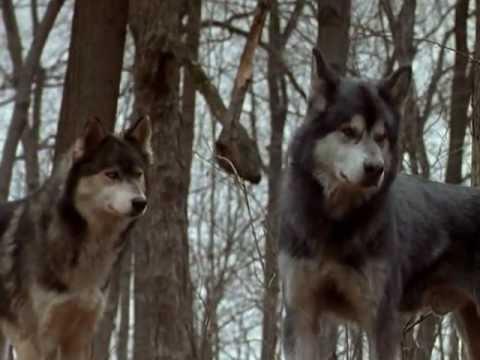 File:Wolfs.jpg