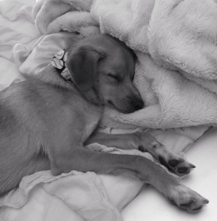 File:Black&White-ToulouseSleeping.png
