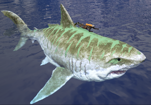 File:800px-Sharky Size.png