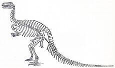Humped Megalosaurus