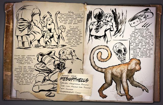 File:Mesopithecus.jpg