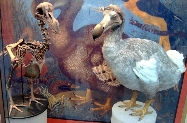 File:1280px-Oxford Dodo display.jpg
