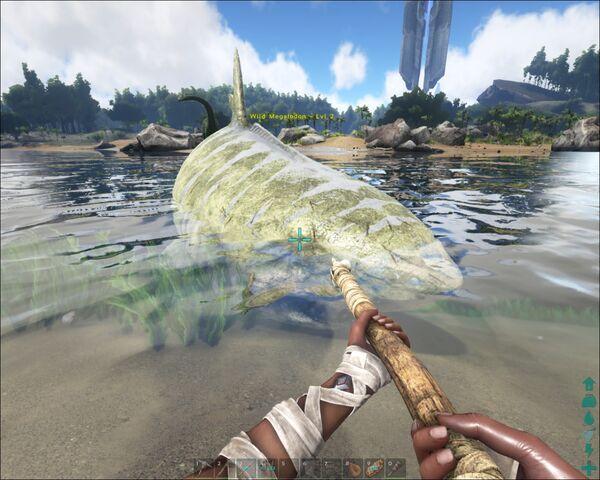 File:ARK-Megalodon Screenshot 009.jpg