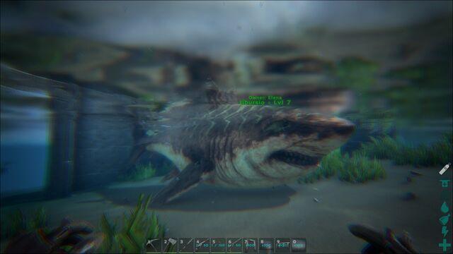 File:ARK-Megalodon Screenshot 004.jpg
