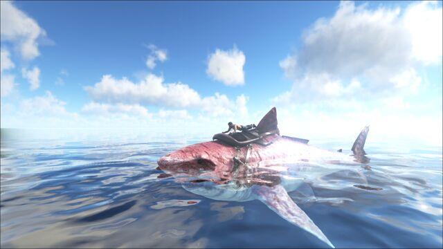 File:ARK-Megalodon Screenshot 010.jpg