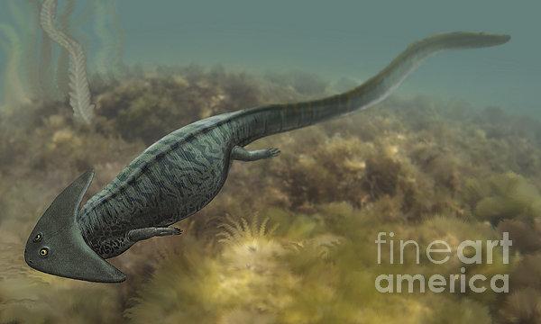 File:Diplocaulus-salamandroides-sergey-krasovskiy.jpg