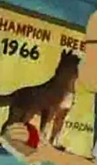 1966champion