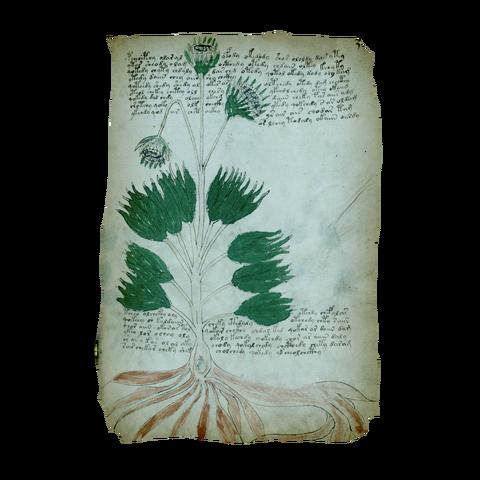 File:AC4BF Voynich Manuscript - Folio 34r.png