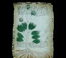 """Database: """"Voynich Manuscript"""" - Folio 34r"""
