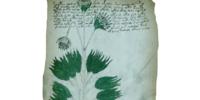 "Database: ""Voynich Manuscript"" - Folio 34r"