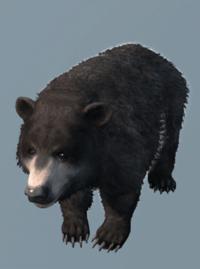 DB Bear