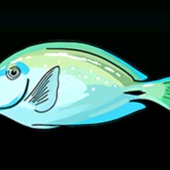 月尾刺尾鱼 - 稀有度:普通,尺寸:中