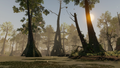 AC3L Bayou Viewpoint 2.png