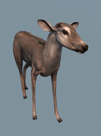 Samica jelenia białowargiego