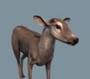Database: Deer (Assassin's Creed III)