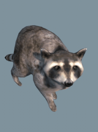 DB Raccoon.png