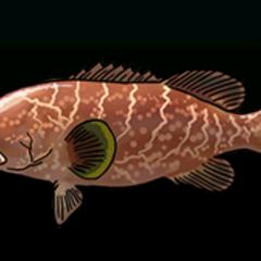 Tiger Grouper - 稀有度:普通,尺寸:中