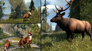 Animals to hunt in AC3