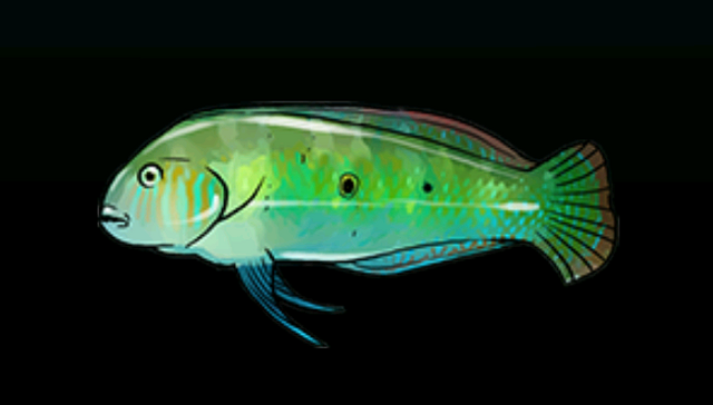File:GreenRazorFishACP.png