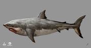 AC4 Shark - Concept Art