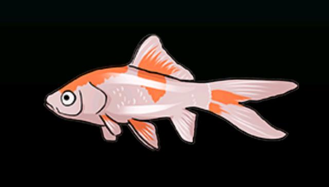 File:CometfishACP.png