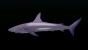 GalapagosSharkACP