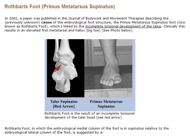 File:Rothbarts Foot Definition with photos.jpg