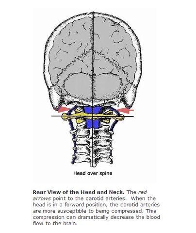 File:Head over Spine.jpg