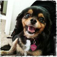 Pixie (1)