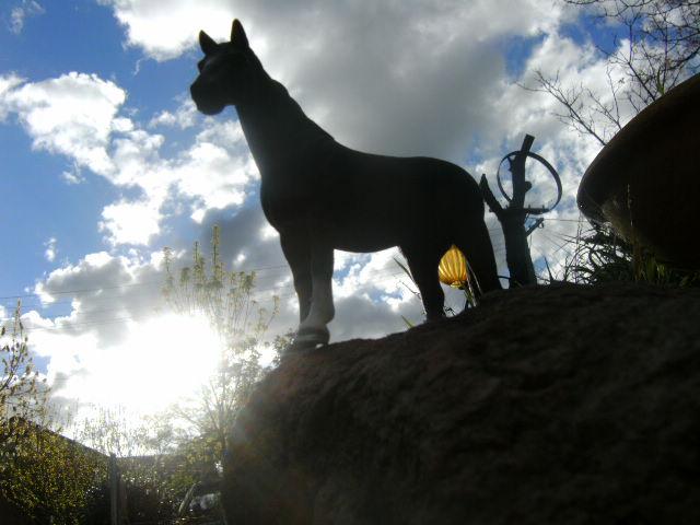 File:Days of endless sun by schwartz pferde-d4adwww.jpg