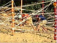 File:VC Islandares AUS 20030920 08.jpg