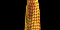 Baked Corn Bat