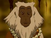 Baboon spirit