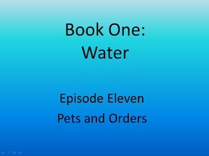 11 pets and orders