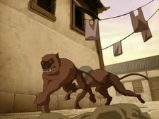Hog monkey.png