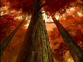 Thumbnail for version as of 13:29, November 9, 2011