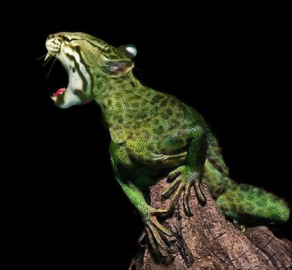 File:Catfrog.jpg