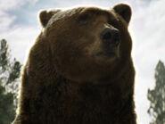 Bart the Bear as Bear (PD)